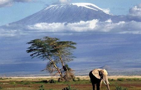 kenya-kilimanjaro1