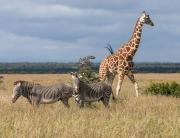 kenya-north-frontier1