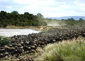 kenya-wildebeest1