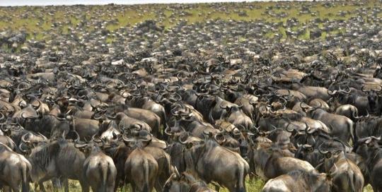 tanzania-serengeti1